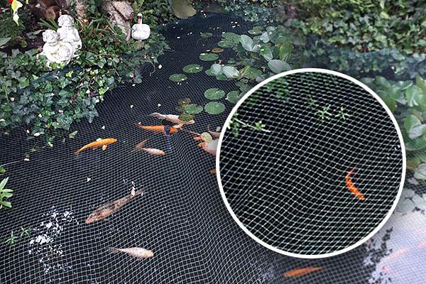 Grobes Teichnetz ermöglicht den Teich weiterhin zu betrachten